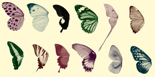 Butterfly Wings Brush Set