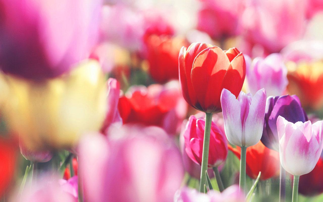 Букет из шаблонов для флористов: 15 самых лучших вариантов